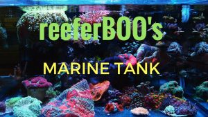 Nano Marine Tank | Gelo's Pride and Joy