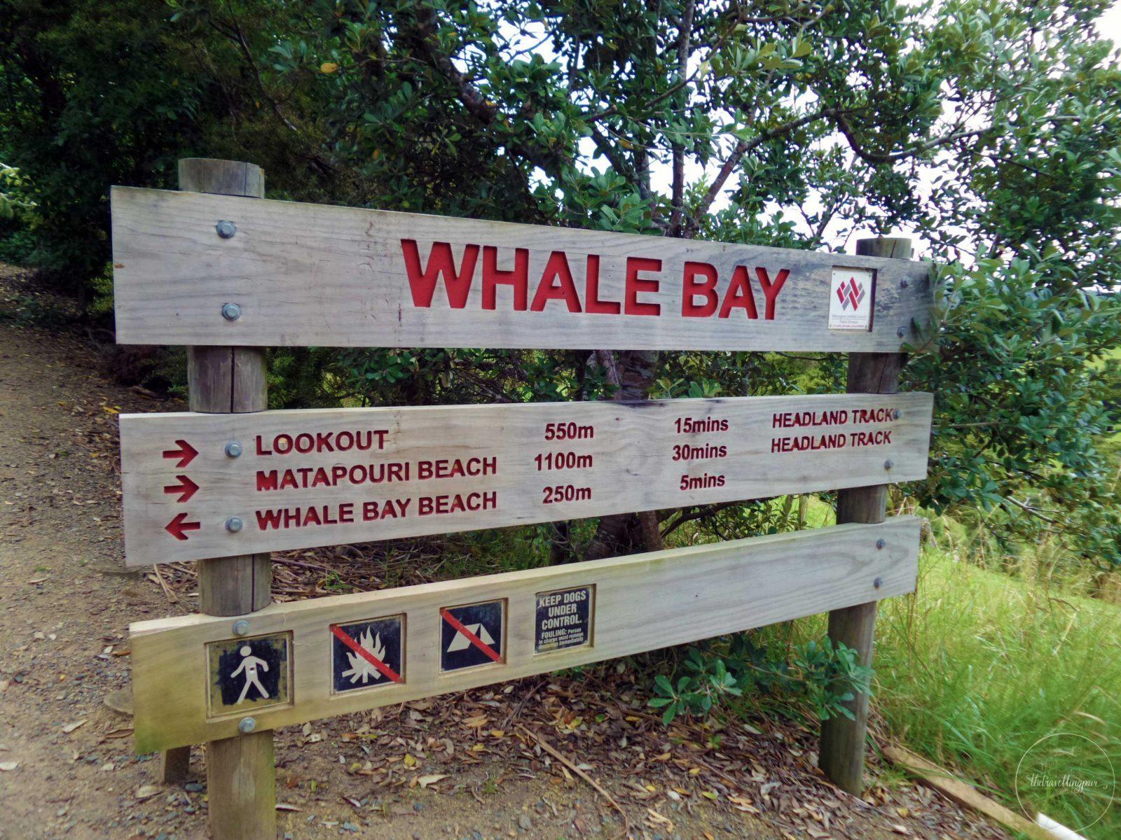 Whale-Bay