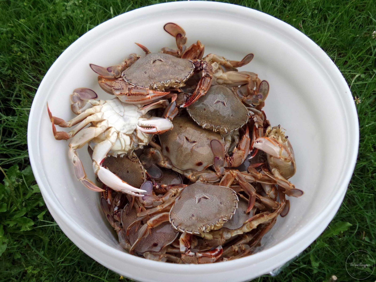 Crabbing at Marsden Point