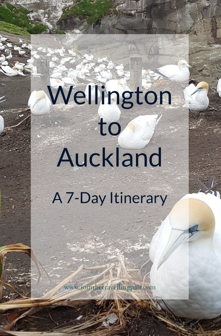 Wellington-to-Auckland Pinterest Photo