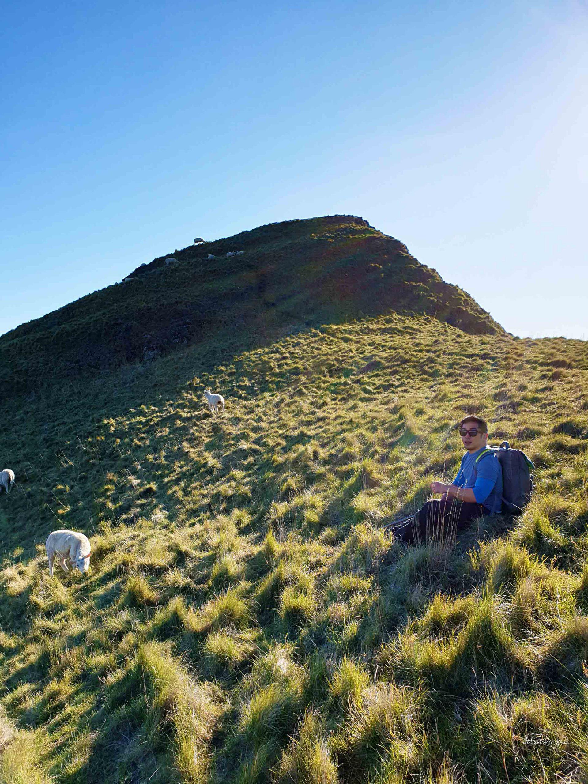 Te Mata Peak Hawke's Bay - Join the Travelling Pair